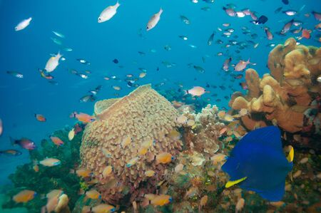 Huge Neptunes cup or sponge with many fish Stock Photo - 15673176