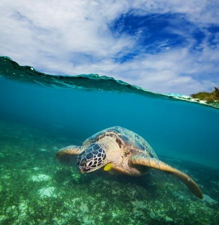 바다 바닥에 거북이 수영 - 반 수중 촬영 스톡 콘텐츠