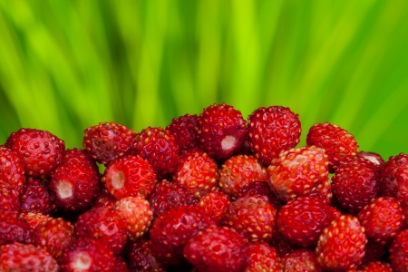 a pile of ripe wild strawberries on green background photo