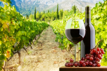 wine road: Bottle and glass of red wine on vineyard background with branch of grapes on the table