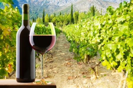Bottle and glass of red wine on vineyard background photo