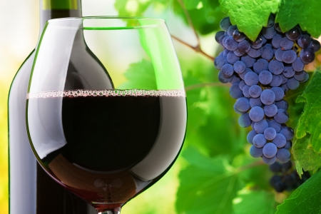 Close-up of a glass and bottle of red wine with grapes growing on the vineyard on background photo