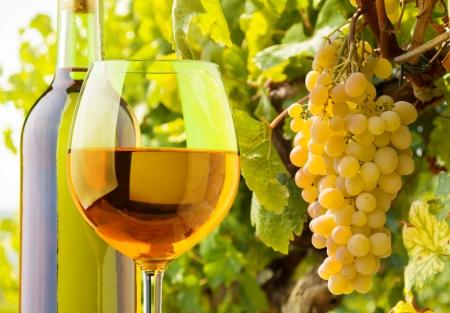 Close-up von einem Glas und eine Flasche Weißwein mit Trauben wachsen auf dem Weinberg im Hintergrund