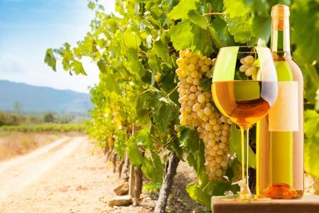 paisaje mediterraneo: Botella y vaso de vino blanco en el fondo viñedo Foto de archivo