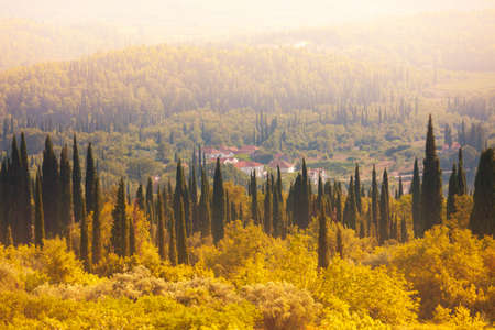 mediterranean forest: Croatian forest and fields in evening light