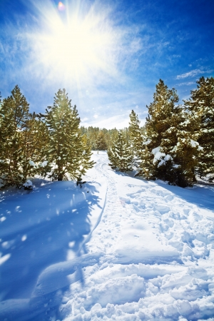 tourism in andorra: Snow path in snowy mountain forest with pines and spruce trees