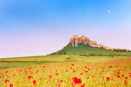 Castillo de Spis en la colina con campo floreciente de la amapola en el norte de Eslovaquia Foto de archivo