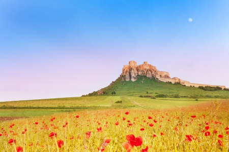 Spis Castle on the hill with blooming poppy field on the North of Slovak republic