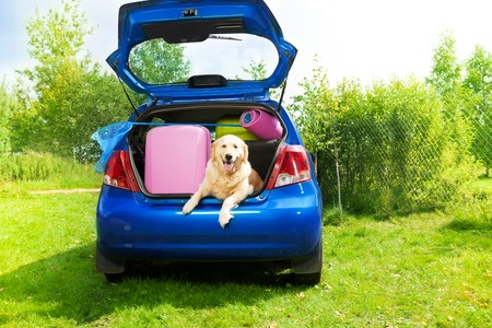 Dog and bags and other luggage in the trunk of the car on the back yard ready to go for vacation photo