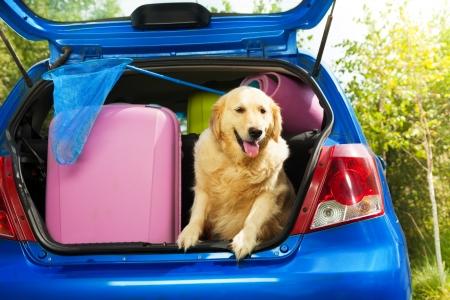 detras de: Cerca disparar de un perro y de bolsos y otros artículos de equipaje en el maletero del coche en el patio trasero listo para ir de vacaciones