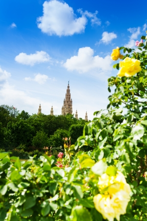 Vienna town hall from the park and yellow roses in the Volksgarten park on sunny spring day photo