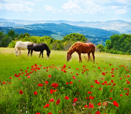 There horses grazing grass in the field with mountains on background and poppy fields on foreground photo