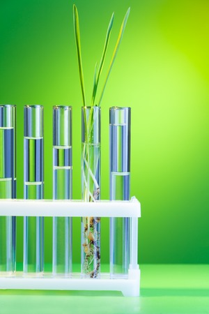 biological science: One fresh green sprout in the row of test tubes on green