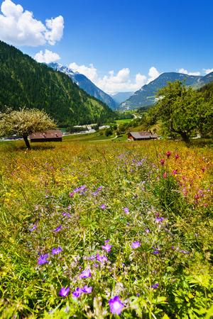 swiss alps: Kwiaty pole drzew i domów przed górami w Szwajcarii