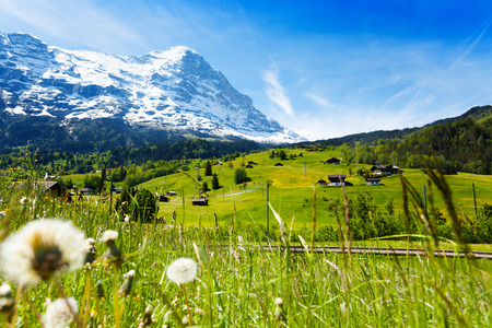 Blooming dandelion flowers on the background of beautiful Swiss landscape with Alps mountains covered with snow and crossing railway road photo