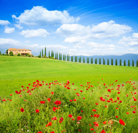 Red poppy flowers, trees in row and house, in Tuscany landscape, Italy photo