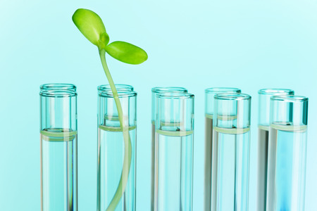 Green plant grows in test tube filled with water among other\ test tubes