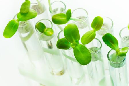 白いテーブルに水で満たされた試験管内の多くの緑の植物