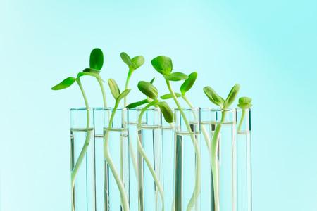 테스트 튜브 행에서 성장하는 녹색 식물 물으로 가득