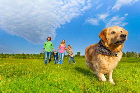 person outside: Running dog in front of happy family walking in park in summer Stock Photo