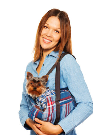 Yorkshire Terrier in dogs carrying bag with woman