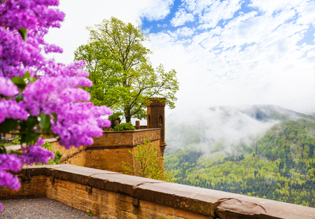 swabian: View in haze from Hohenzollern castle with flower Editorial