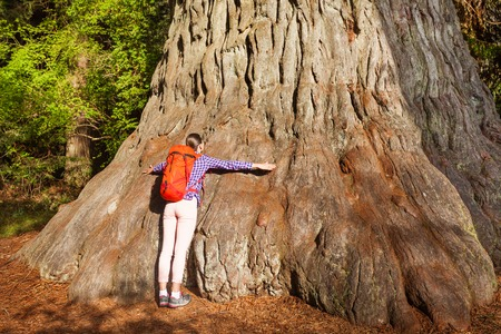 Woman embraces big tree in Redwood California during summer sunny day 스톡 콘텐츠