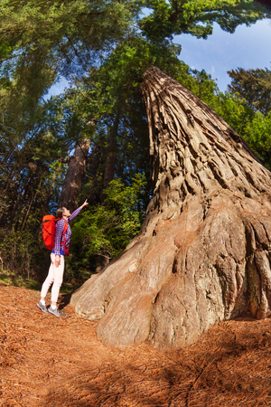 Pointing girl standing near the big tree in Redwood California during summer sunny day view from below 版權商用圖片