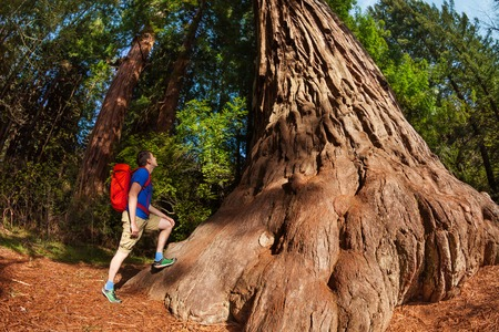 Man with backpack stands near big tree in Redwood California during summer sunny day, United States