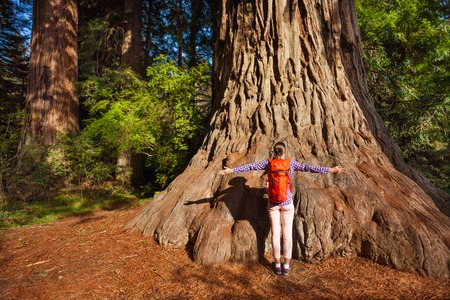 Woman with straight arms near the big tree in Redwood California during summer sunny day