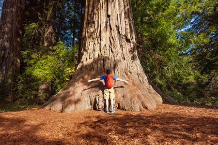 redwood: Man with backpack embraces big tree in Redwood California during summer sunny day, United States Stock Photo