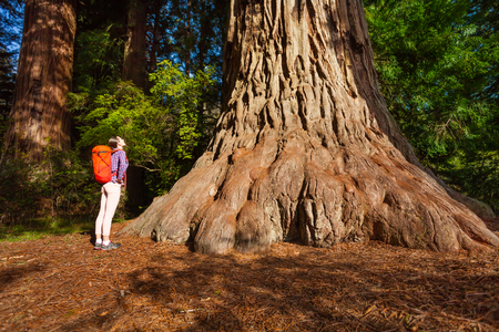 redwood: Woman with backpack standing near the big tree in Redwood California during summer sunny day view from below