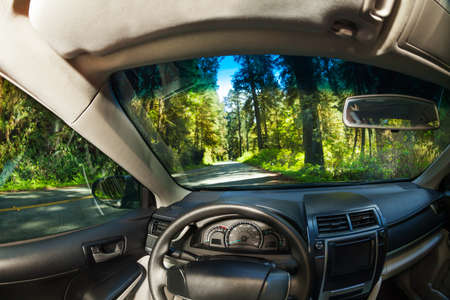green and black: View inside the car with beautiful forest view of Redwood during summer in  California