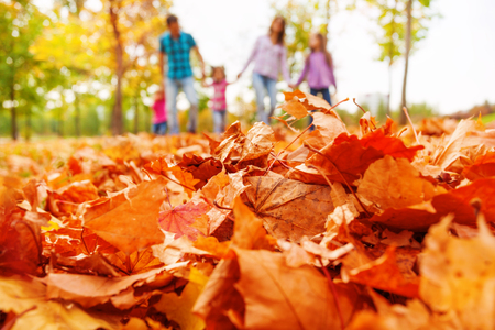 Autumn orange leaves close up and out of focus family walks on the background walking holding hands