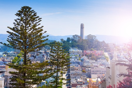 Panorama and Coit Tower behind the fir tree over the San Francisco city buildings