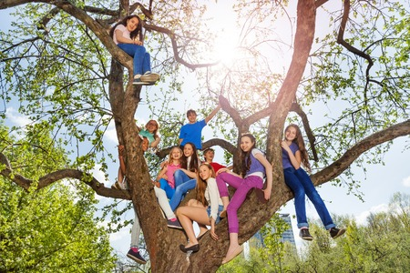 Teenagers sit together on tree during beautiful summer day the park