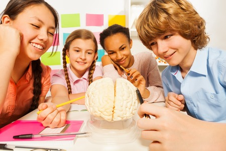 13 15 years: Four multi ethnic students studying the anatomy with cerebrum model at the classroom Stock Photo