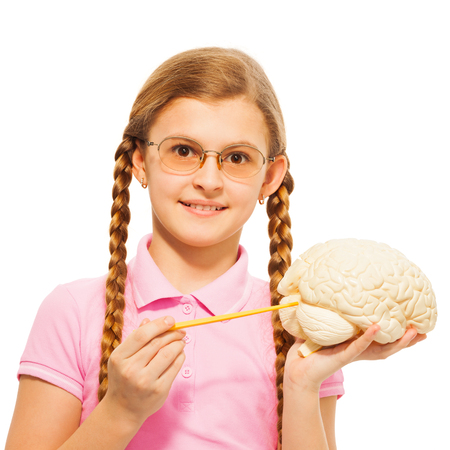 encephalon: Schoolgirl in glasses with two long plaits holding cerebrum model and yellow pointer, isolated on white Stock Photo