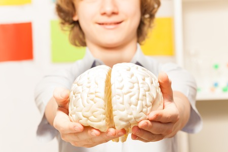 encephalon: Smiling 13 years old boy holding cerebrum model at his hands Stock Photo