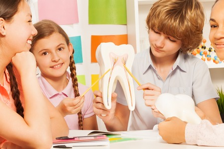 boy 15 year old: Four multi ethnic teens studying tooth structure, pointing to its nerves by two yellow pointers, sitting at the classroom Stock Photo