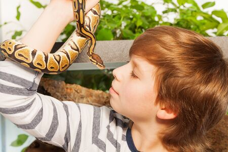 ball python: Close portrait of a young boy holding his lovely pet snake - Royal or Ball Python close to face