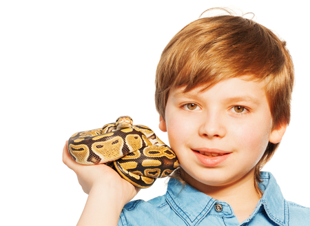 ball python: Close-up portrait of  blond young boy holding Ball python on his hand, isolated on white background