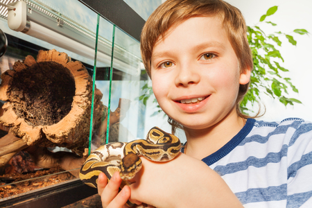 Close-up picture of smiling boy, holding Royal python in his hands, standing near reptile terrarium