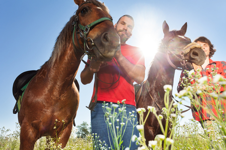 chestnut male: Portrait of two male equestrians with chestnut brown horses in summer field at summer day