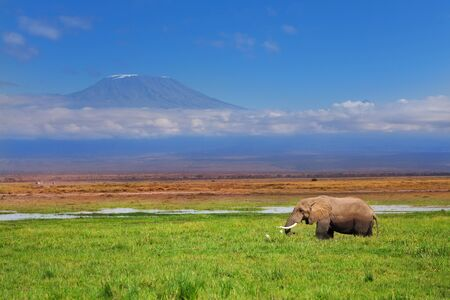 African elephant with Kilimanjaro in background