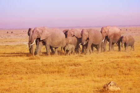 maasai mara: Elephant family in Maasai Mara National Reserve