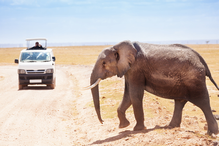 Toeristen in safari nemen foto's van olifanten Stockfoto