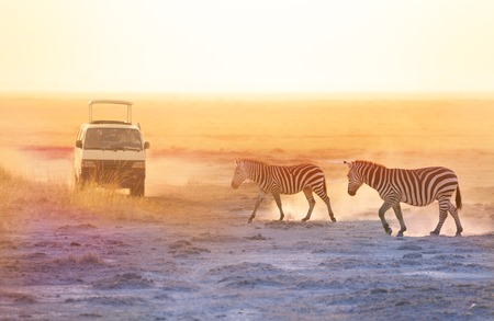 Tourists in safari  taking photos of zebras