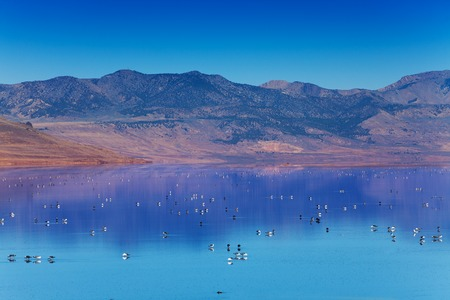 Great Salt Lake with swimming on surface birds Imagens - 73371710