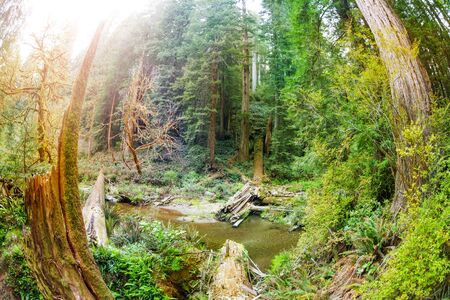 Water stream flowing through Redwood National Park